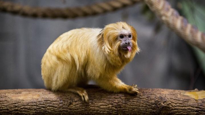 Зоопарк показал, чем на самом деле кормят маленьких обезьянок и пингвинов — 9 милых фотографий