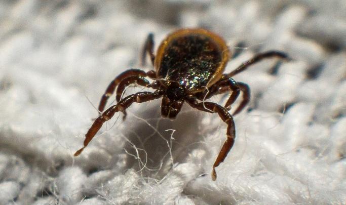 В Курганской области от укусов клещей пострадали 1400 человек