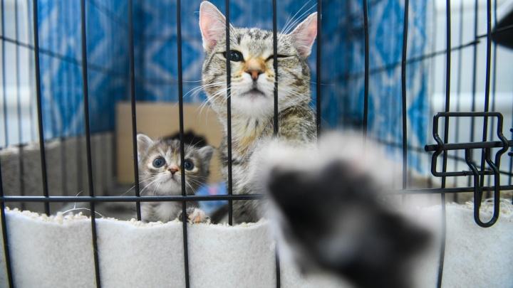 В торговом центре Екатеринбурга раздадут собак и кошек из приюта