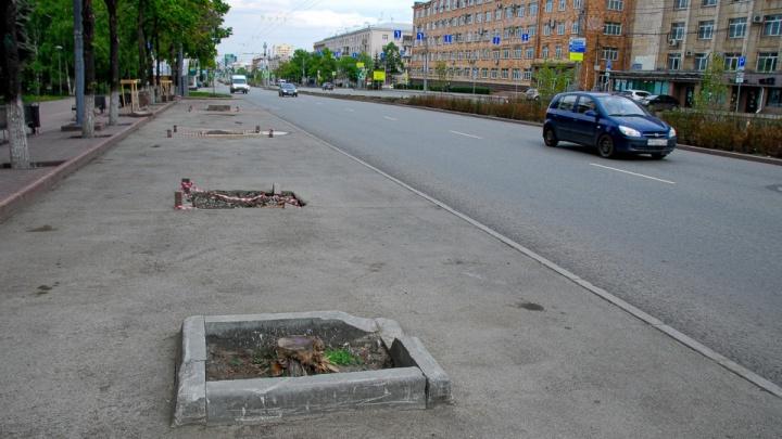 Челябинская мэрия ответила на претензии прокуратуры из-за погибших деревьев
