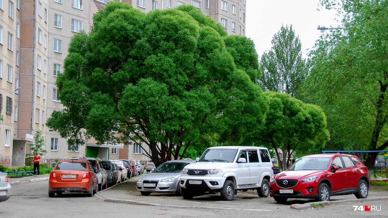 Шаровидные ивы — одни из самых эффектных городских деревьев