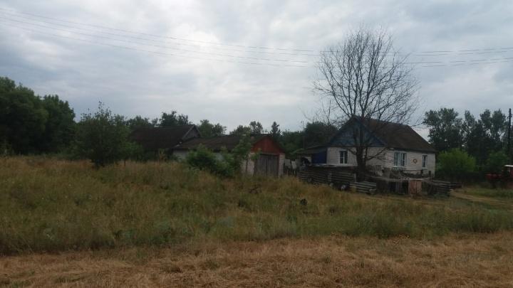 «Умертвить собак и кошек»: в Волгоградской области ввели карантин по бешенству