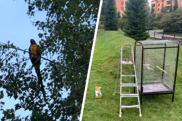 """Птицу пытаются поймать <nobr class=""""_"""">4 дня</nobr>"""