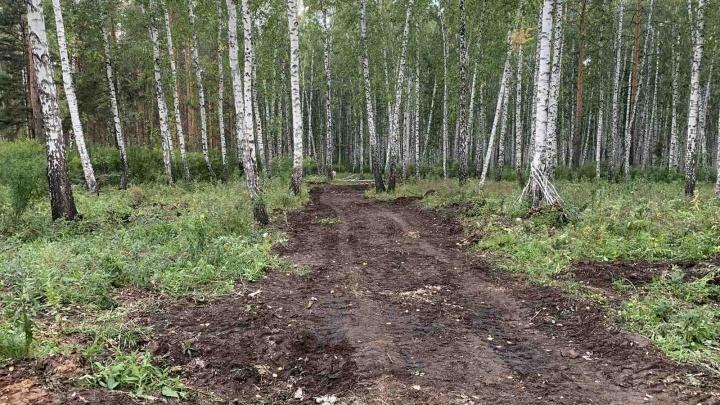 «Содрали бульдозером всё живое»: в челябинском лесу вырубили деревья ради дороги к коттеджам