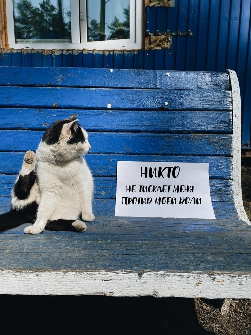 Не думаем, что кот этим недоволен