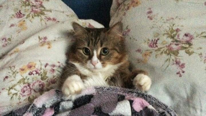 «Где мои горячие батареи?»: 11 котов, которым не понравилось отключение отопления