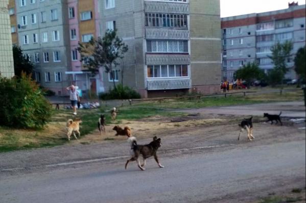 По Далматово бегают стаи беспризорных собак. Это беспокоит местных жителей