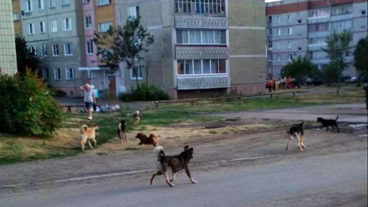 «Стаи собак разрывают бельё на верёвках!»: жители Далматово жалуются на засилье бездомных животных
