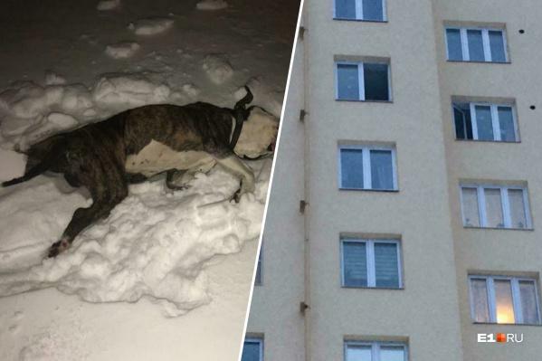 Тело собаки до сих пор лежит в сугробе под окнами
