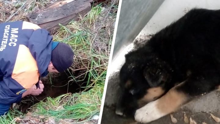 В Новосибирске щенок провалился в яму — на помощь ему пришлось вызывать спасателей