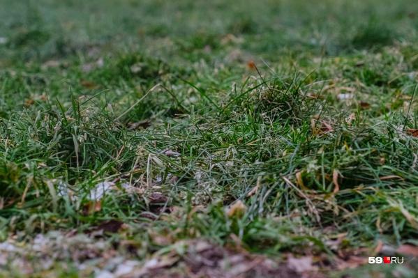 Этой ночью подморозит поверхность почвы