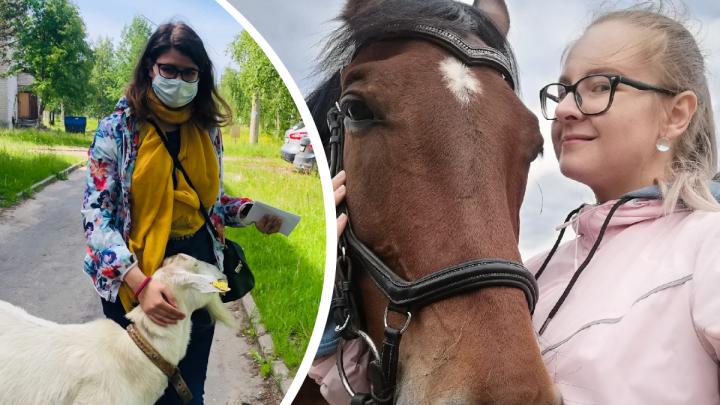Обнимашки с лошадьми и фото с борщевиком: редакция 29.RU делится самыми яркими снимками лета-2020