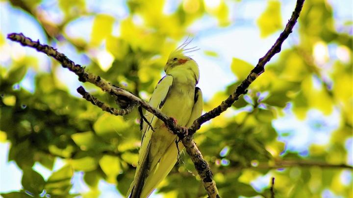 Потому что теперь у нас тропики: на Шарташе поселился попугай