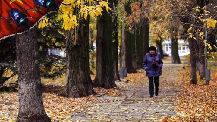 Безжалостная обрезка не спасла: деревья в Волгограде пожирает опасный вредитель из Китая