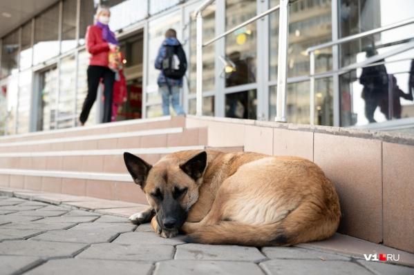 Укус домашней собаки привел к крайне тяжелым последствиям