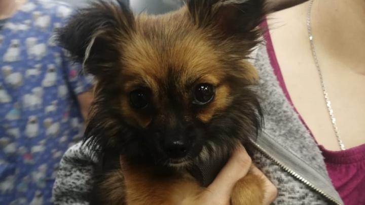 Собака, которую избил живодер на Латвийской, идет на поправку и снова начала есть