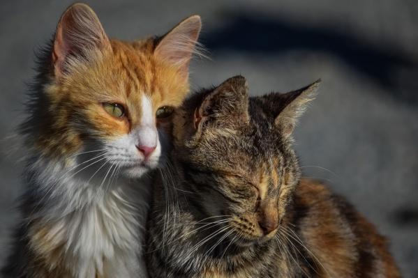 По мере наполнения коробов их содержимое будут передавать в приюты «Наш дом» и «Кошкин дом»