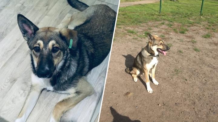 «Вынесла ружье, целилась»: молодую собаку отобрали у группы живодеров во дворе