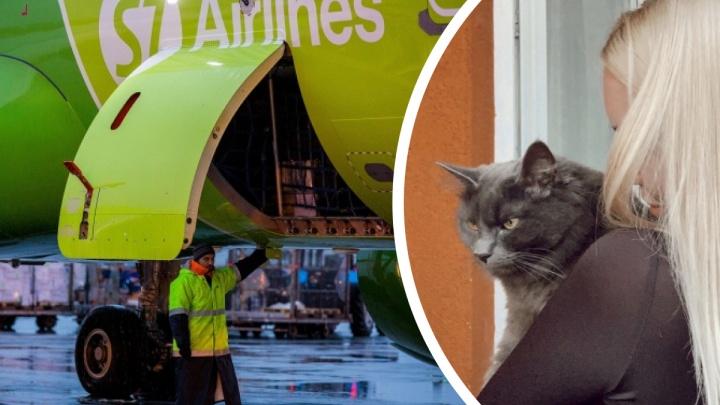 «Ищем его, но силы на исходе»: хозяева кота, выгнанного из салона самолёта, поселились у аэропорта