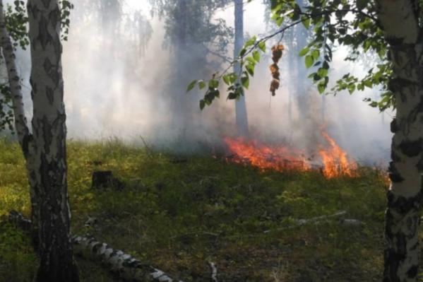 Леса горят из-за аномально жаркой погоды