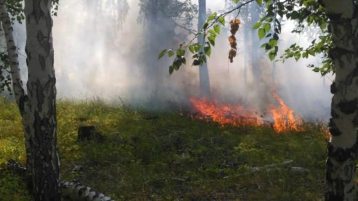 Зауральцам вновь запретили посещать леса