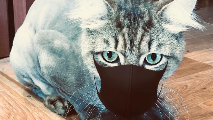 «Не пошел бы ты... на работу?»: 35 котов, которых достали хозяева на самоизоляции