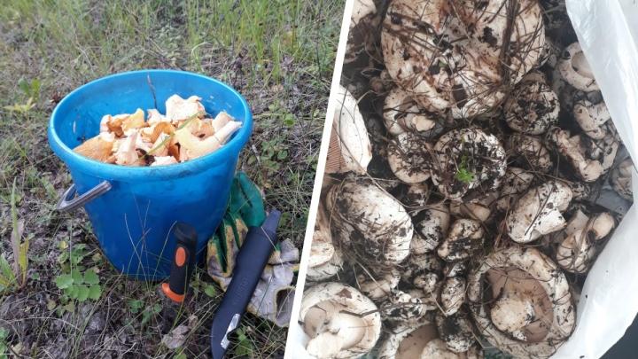 Где собирать грузди и лисички: карта грибных мест Новосибирской области