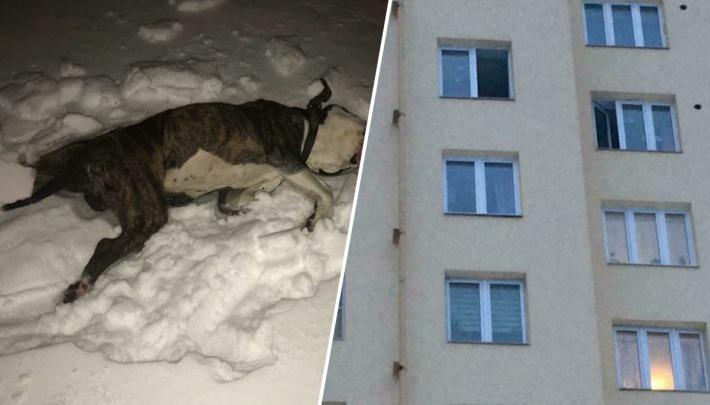 Мужчина, который выбросил свою собаку с десятого этажа, объяснил, зачем он это сделал