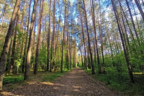 По лесной части парка любят гулять пермяки