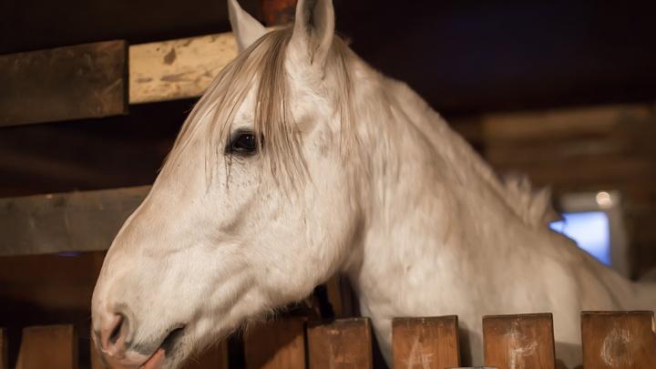 У зауральца украли лошадей и бросили их в лесу