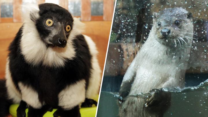Что делают звери, когда никто не видит: фоторепортаж из закрытого на карантин зоопарка