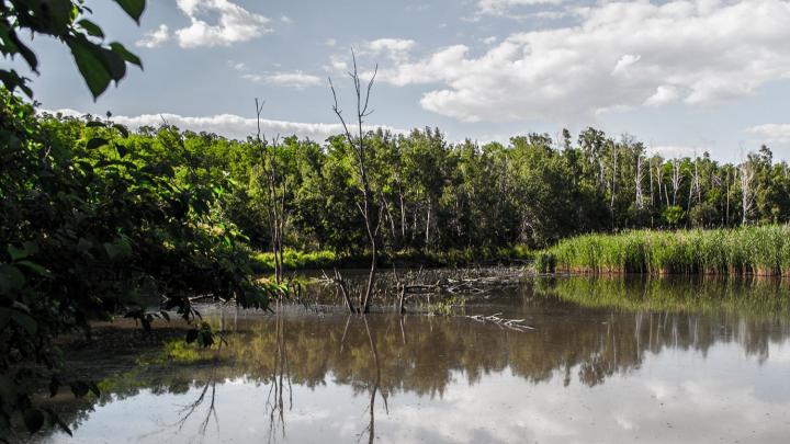 В Ростове осудят подрядчика, укравшего 43,8 миллиона рублей при расчистке реки Темерник