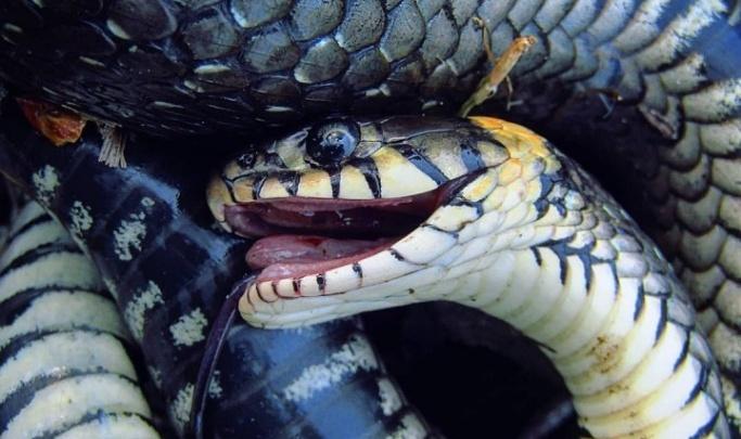 В день по пять погибших: волгоградцы массово истребляют змей в Волго-Ахтубинской пойме