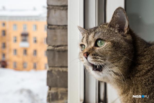 В первый день весны по всему миру отмечают День кота — праздник неофициальный, но всё равно не забудьте поздравить сегодня своих пушистиков