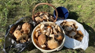 Запасаемся к зиме: карта грибных мест в Омске и области