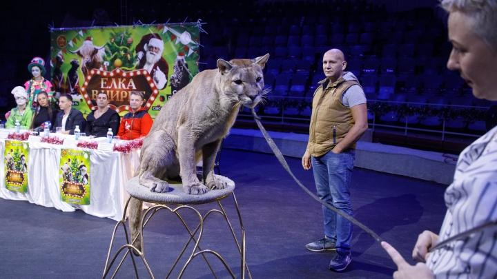 «Думали, что к лету все закончится»: из-за коронавируса цирк Волгограда закрыли на десять месяцев