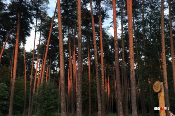 Лесничий расскажет о животных, живущих в лесу, и его содержании