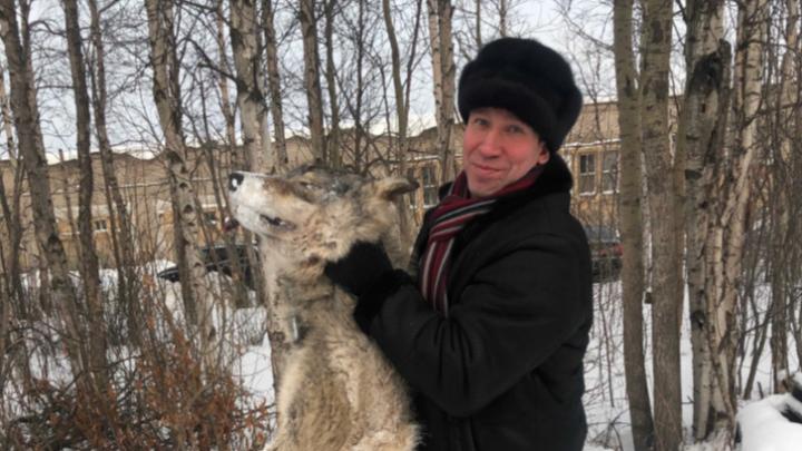 В Архангельской области увеличили на 15 тысяч выплату за добычу волка