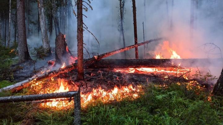 Площадь пожара в заповеднике «Денежкин Камень» увеличилась до 65 гектаров