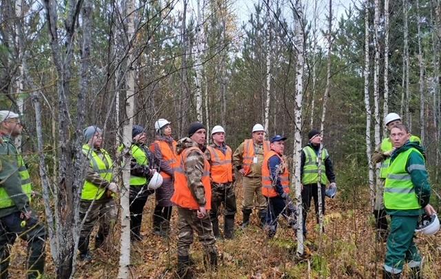 Вырастить качественный лес: как WWF и ГК «Титан» развивают «правильное» лесопользование в Поморье