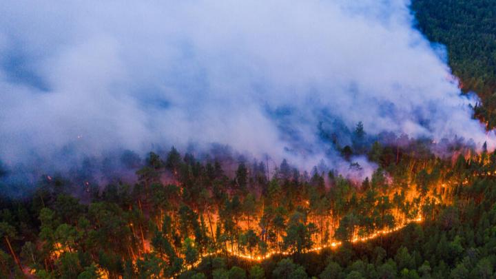 Гринпис опубликовал страшные фото лесных пожаров. В правительстве заверили, что волноваться не стоит