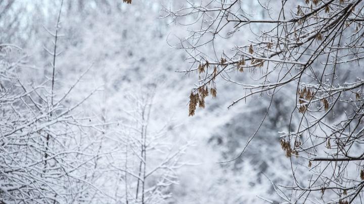 Морозы до -22 °C придут на север Ростовской области