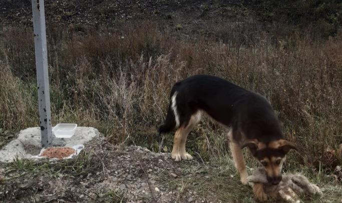 Спустя год рассказываем, что стало с собакой, жившей на обочине дороги с плюшевым котом