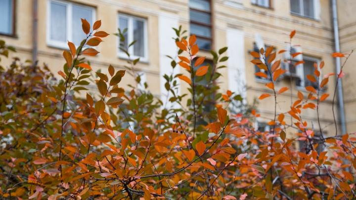 В Волгограде и области ожидают первые заморозки