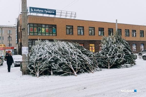 Стоимость аренды места под елочный базар в Омске начинается от 4563 рублей за месяц