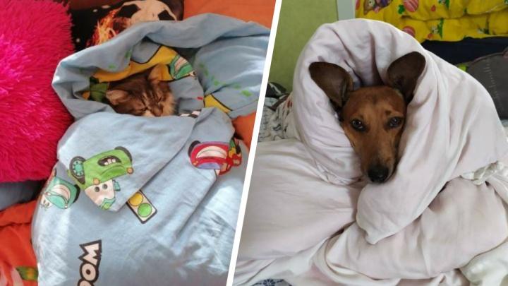 Когда дома дубак: 12 фото, как находчивые котики и пёсики спасаются от холода