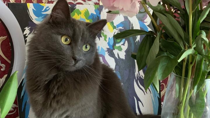 «Всё, нет его!»: в Ярославле кот Кузя совершил побег из самолёта. Как всё было