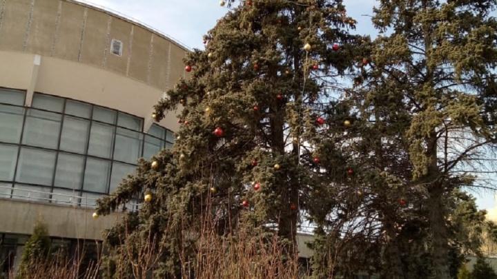 Центр Волгограда встретил 8 Марта с новогодней ёлкой