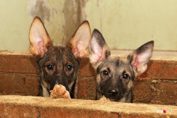 Приютские собаки нуждаются во внимании и заботе волонтеров