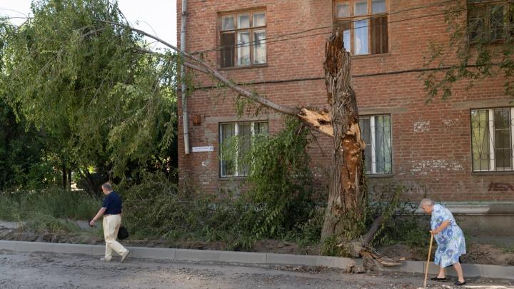 В Волгограде начался сезон падающих деревьев